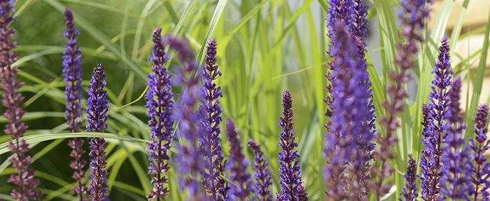 Växter till din trädgård