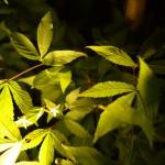Trädgårdsbelysning, Belysningsplan
